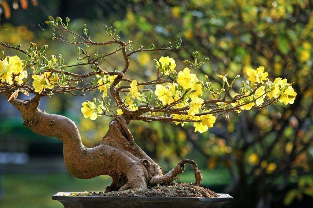 ベトナムのお正月(三が日)